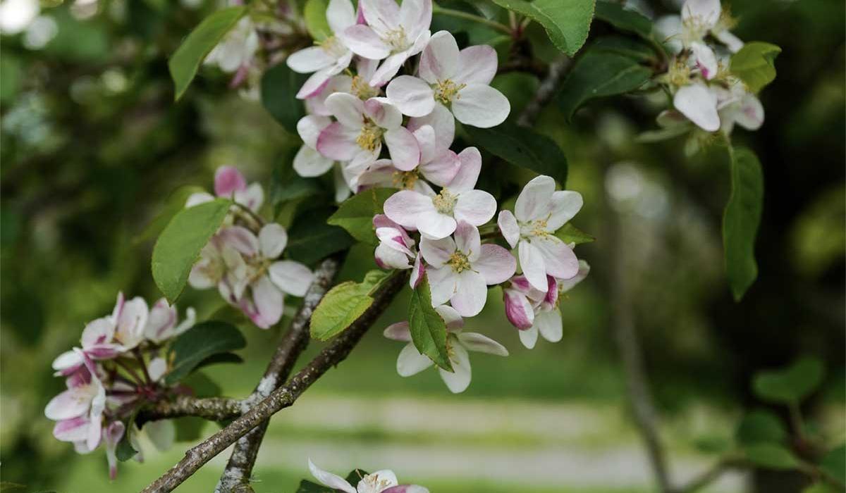 Blossom - British Flowers & Foliage, Weddings & Wholesale